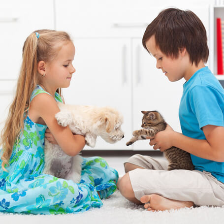Puppy and Kitten Care in Seattle