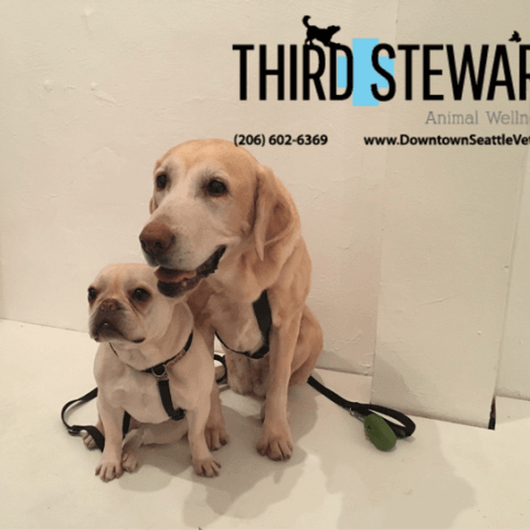 Puppies at Third & Stewart Animal Wellness