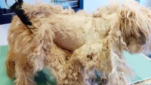 matted body